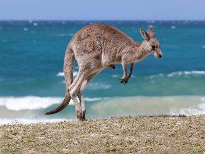 Backpacken in Australië? Hier moet je op letten